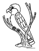 Bird Coloring Page 10