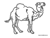 Camel with One Hump
