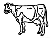 Adult Cow 1