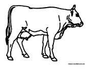 Adult Cow Without Spots