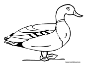 Duck Coloring Page 1