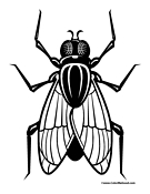 house fly coloring pages - photo #39