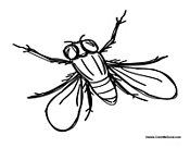 house fly coloring pages - photo #33