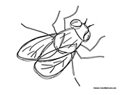 house fly coloring pages - photo #14