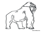 silverback gorilla coloring pages - photo#8