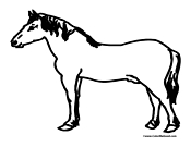 Horse Coloring Sheet