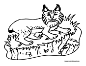Lynx Coloring Page 1