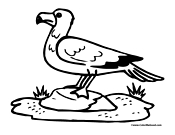 Seagull Coloring Page 1