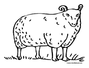 Sheep Coloring Page 1