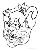 Squirrel Coloring Page 1