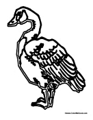 canada goose coloring page - canada coloring pages canadian culture