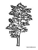 california redwood coloring pages - photo#22