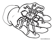 Spider Coloring Page 3