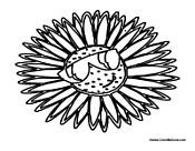 Cartoon Daisy Flower