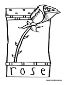 Rose Poster to Color